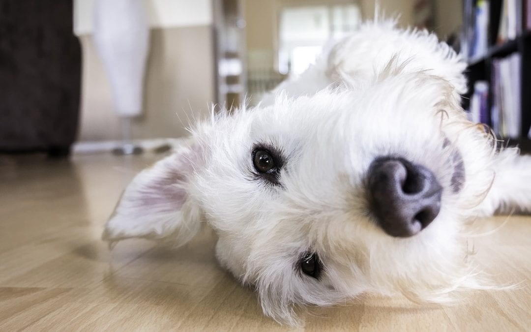 10 Ways to Help Your Pet Live Longer and Save You a Bunch of Money on Vet Bills at the Same Time! #1